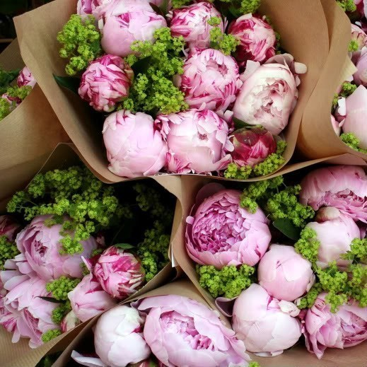 peonies wrapped in paper