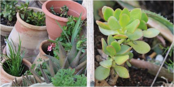 succulents/cactuses