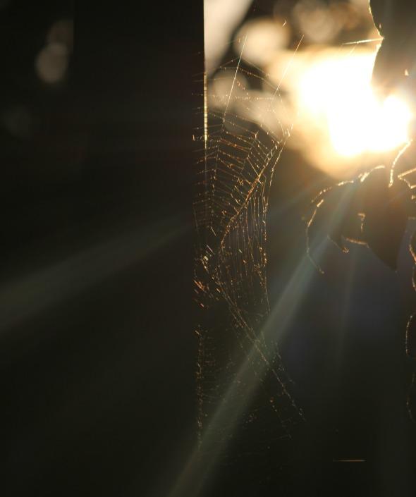 sunlit web