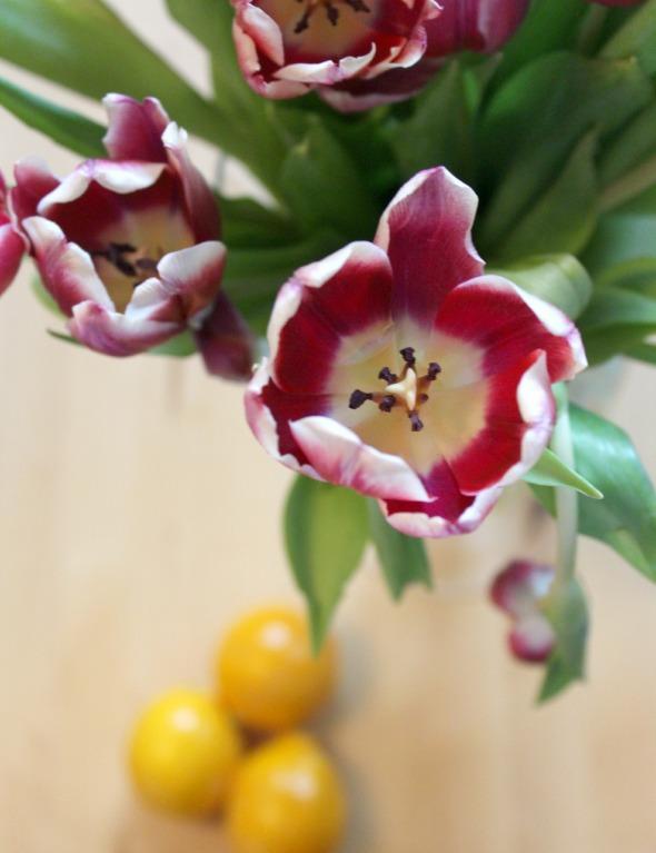 tulips + meyer lemons