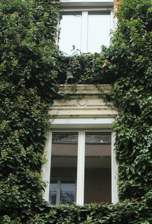 vine covered windows
