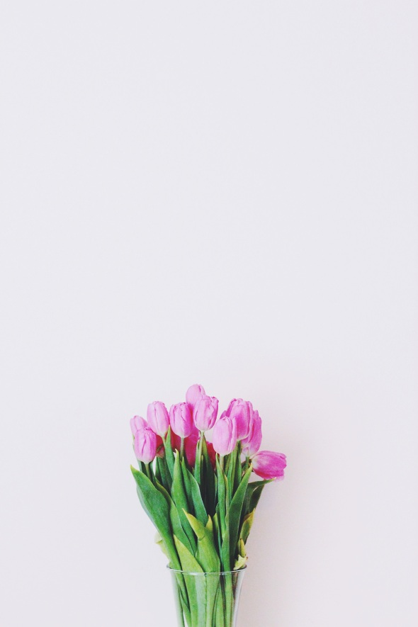springy pink tulips