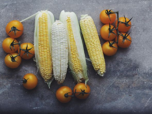 sweet corn and tomatoes