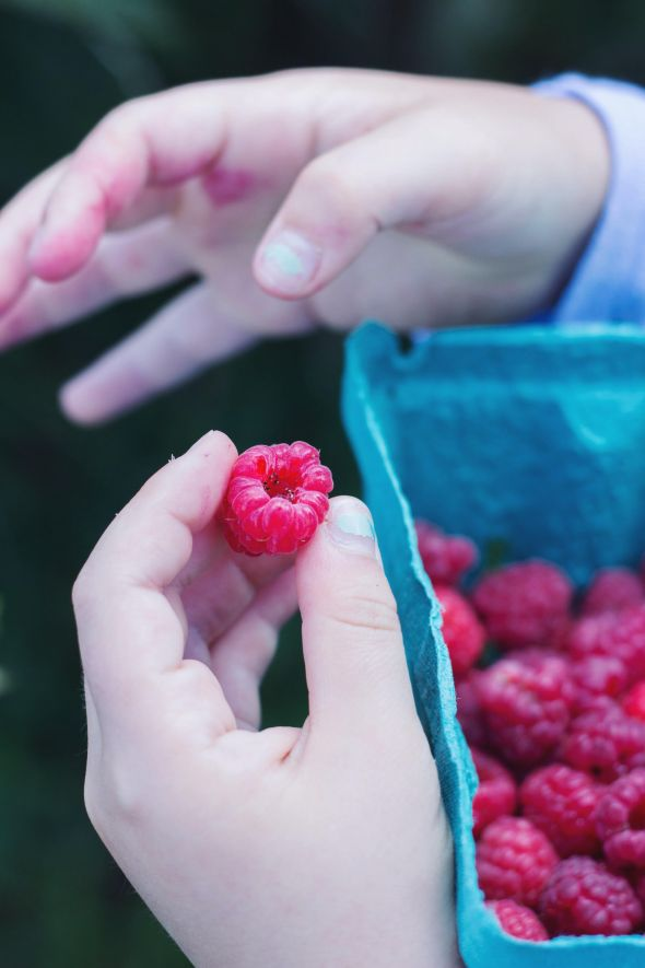 raspberry stained hands