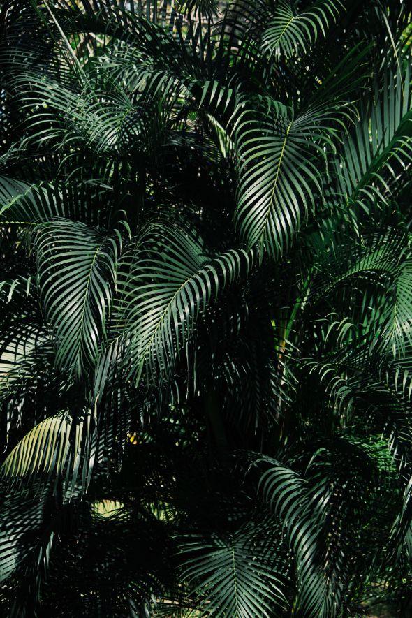 palm tree life