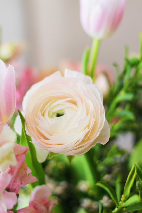 spring ranunculus